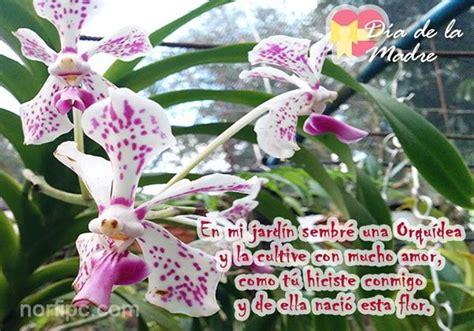 postales  fotos de orquideas dedicadas  mi madre