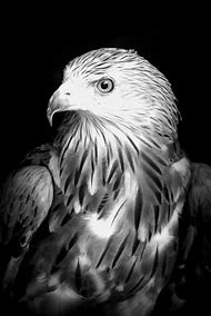 Eagle Black and White Photography