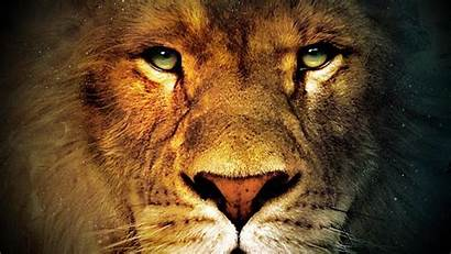 Lion Angry Eyes Face Male Wallpapers Faces