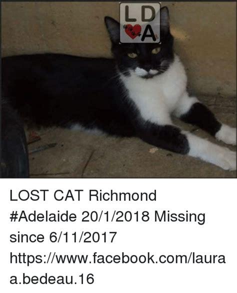 Lost Cat Meme - l d lost cat richmond adelaide 2012018 missing since