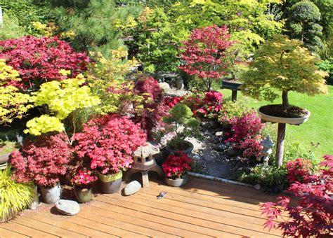 japanischer ahorn topf japanischer ahorn auf dem balkon 187 pflanzen und pflegen