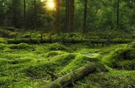 Daily Wallpaper Mossy Forest I Like To Waste My Time