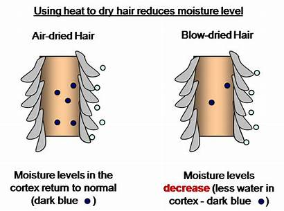 Hair Blow Moisture Drying Heat Dry Water