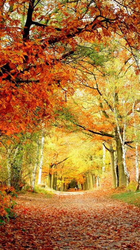 Fall Backgrounds For Phone by 488 Best Images About Phone Wallpapers On