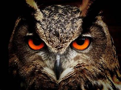 Owl Facts Owls Night Animals Known They