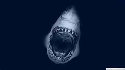 Scary Wallpapers Shark Really Wall