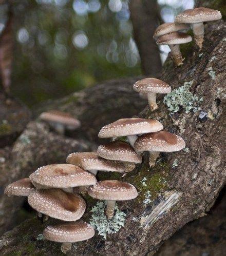 Edible Backyard Mushrooms by Best 25 Logs Ideas On Wooded Backyard