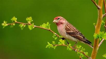 Birds Backgrounds Desktop Definition Wallpapers
