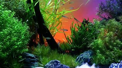 Fish Tank Desktop Aquarium Wallpapers 3d Fishes