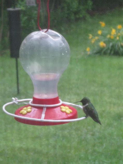 make a hummingbird feeder how to make perches for a hummingbird feeder 10 steps