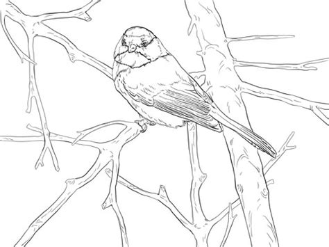 black capped chickadee songbird coloring page
