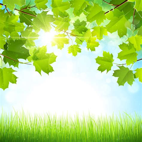 Sunlight With Nature Background Art Vector Free Download