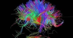 Neurociencia  M U00fasica En La Ciencia    U00bfes Posible Construir