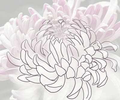 Flower Pencil Outlines Drawing