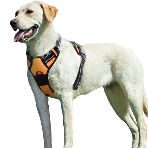 kong harness  dogs amazoncom