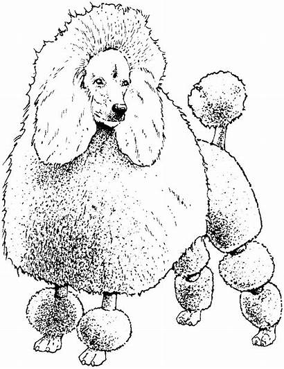 Coloring Pages Poodle Dog Colouring Printable Toy