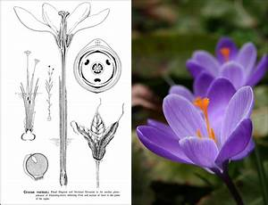 Types Of Floral Mechanism A Selection Of Diagrams And Descriptions Of Common Flowers Arranged As An Introduction To The Systematic Study Of Angiosperms 1908 Hardcove