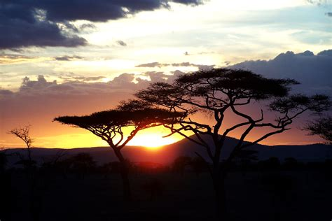 Serengeti Sunset. | The sun sets over Serengeti National ...
