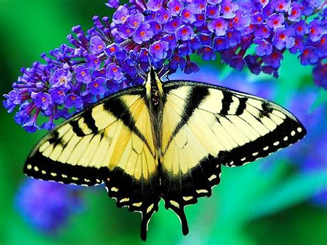 Browse our content now and free your phone. 48+ Beautiful Butterflies and Flowers Wallpapers on WallpaperSafari