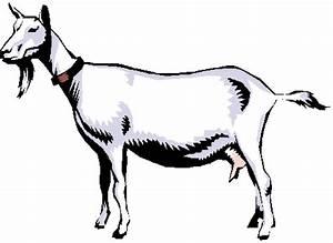 Farm Pets: Meet Pony, Luna & Thunder