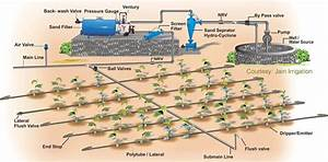How Exactly Does Drip Irrigation Work