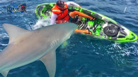 scary shark fishing amazing fish sharks flip kayak shocking fight youtube