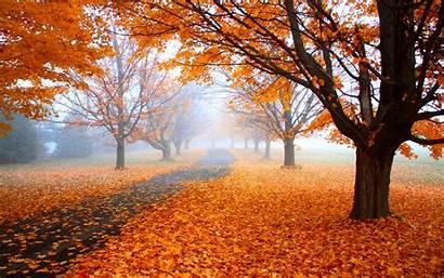 Fall Nature Landscape Orange Trees Road Morning