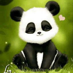 popular  trending panda gifs  picsart