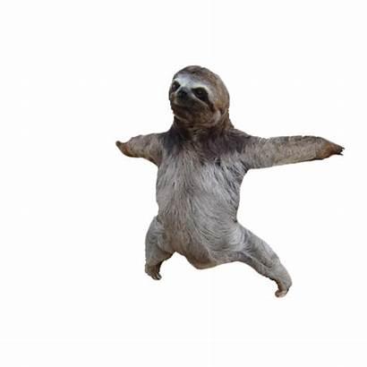 Sloth Transparent Background Meme Clipart Memes Sloths