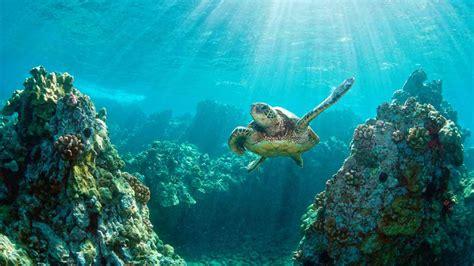 wisata bali  pulau penyu  glass bottom boat sewa