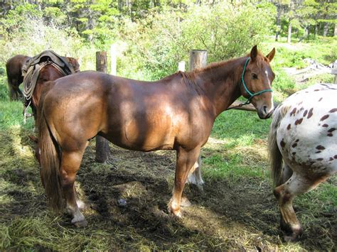 horses horse butt they chestnut eat stripe neigh run chestnuts birds snakes mules