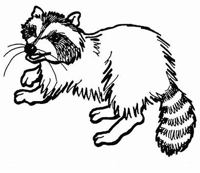 Raccoon Coloring Pages Clipart Printable Cartoon Dog