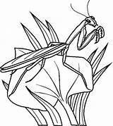 Coloring Pages Bug Praying Bugs Printable Bunny Mantis sketch template