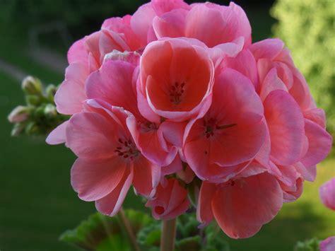 Rote Pilze Im Garten by Wundersch 246 Ne Rote Lilien Im Garten Landschaftsfotos Eu