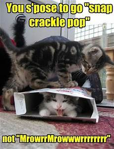 LOL Cats: 50 Awesomely Funny Cat Photos to Crack You Up