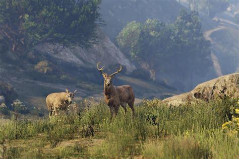 The 5 Weirdest Wildlife Clips