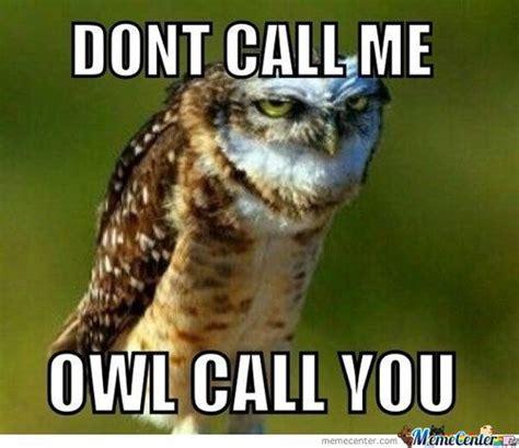 Owl Who Meme - the adventures of owl girl