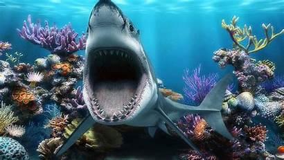 Shark Mouth Wallpapers Fish Tank Sharks Coral