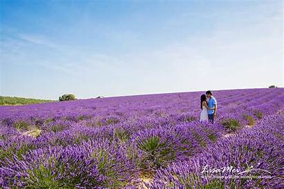 Lavender Animated Fields Endless Animation Haha