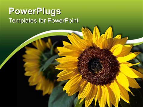 powerpoint template  sunflower   reflection int