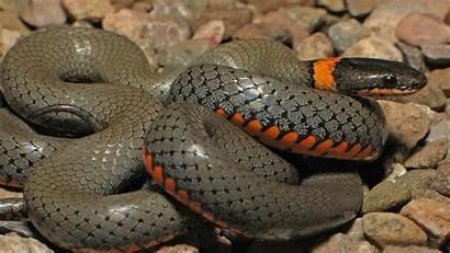Anaconda Snake Python Wallpapers 1080 Background Wallpapers13