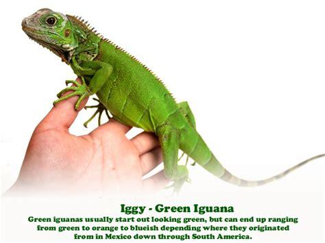 san diego lizard reptile party
