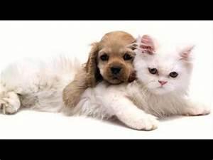 Balkonschutz Für Katzen : entspannende musik f r hunde und katzen s e tr ume youtube ~ Eleganceandgraceweddings.com Haus und Dekorationen