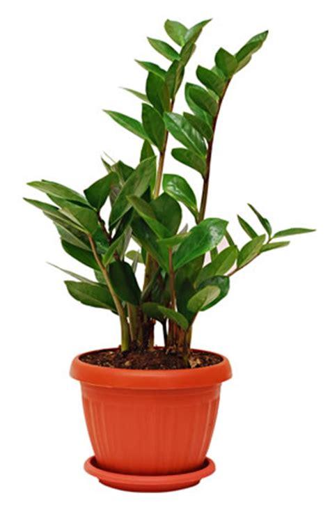 Zimmerpflanzen Im Schlafzimmer  Empfehlenswerte Pflanzen