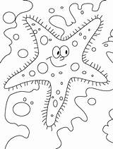 Starfish Coloring Printable Outline Clipart Sheets Sea Drawing Letscolorit Sheet Cartoon Clip Library Coloring2print sketch template
