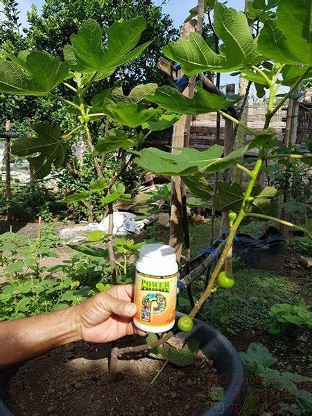 jual beli pupuk organik  tanaman buah power bukalapak