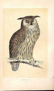 vintage eagle owl illustration | sk | Pinterest