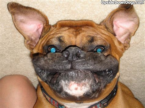 Funny Pictures Of Puppy Dogs Upside Down