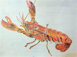 2014 Contest Winners Scientific Illustration: National ...