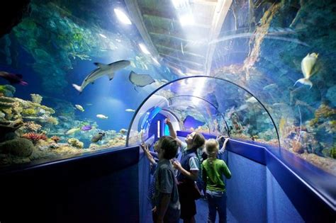 bristol aquarium reviews bristol attractions tripadvisor